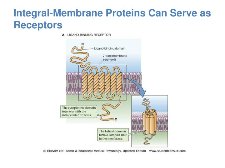 Integral-Membrane Proteins Can Serve as Receptors