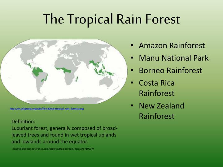 importance of tropical rainforests around the world Rainforests of the world: tropical rainforests surround the earth's equatorial zone and are warm and humid places how old is the rainforest rainforests have been around for tens of millions of years and rainforests provide many other important benefits that we all can appreciate.