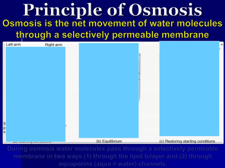 Principle of Osmosis