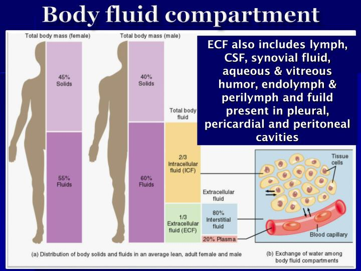 Body fluid compartment