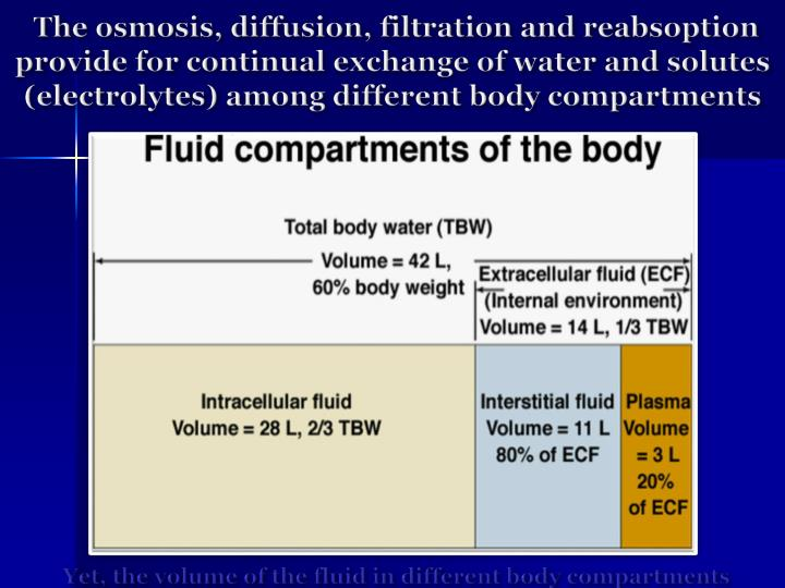 The osmosis, diffusion, filtration and reabsoption provide for continual exchange of water and solutes (electrolytes) among different body compartments