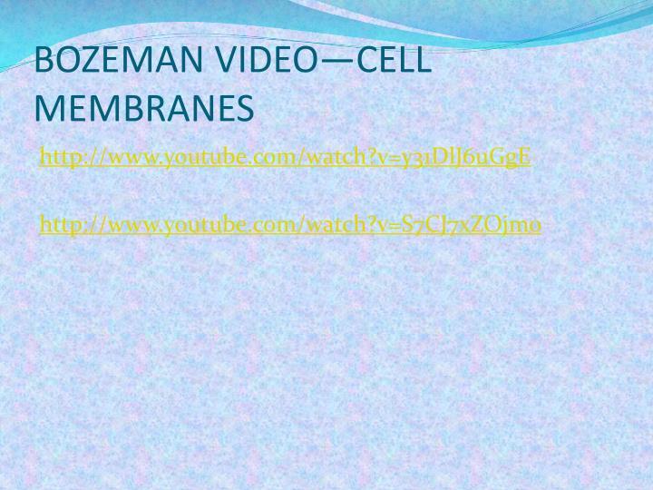BOZEMAN VIDEO—CELL MEMBRANES