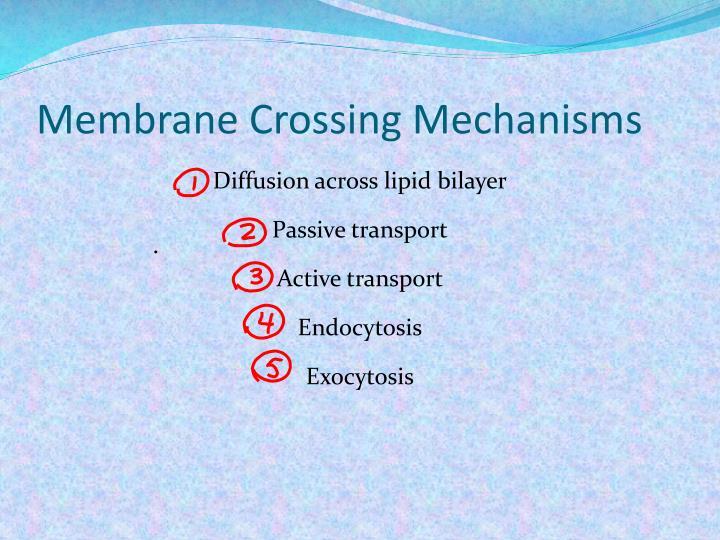 Membrane Crossing Mechanisms