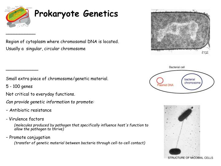 Prokaryote Genetics