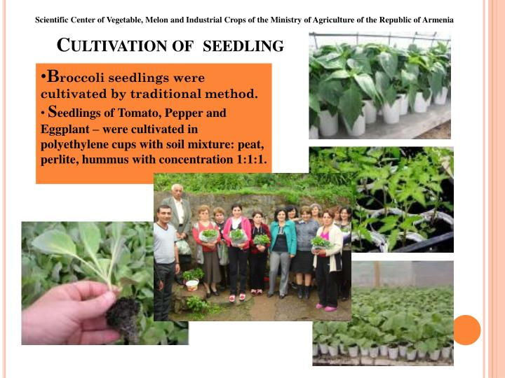 Cultivation of seedling