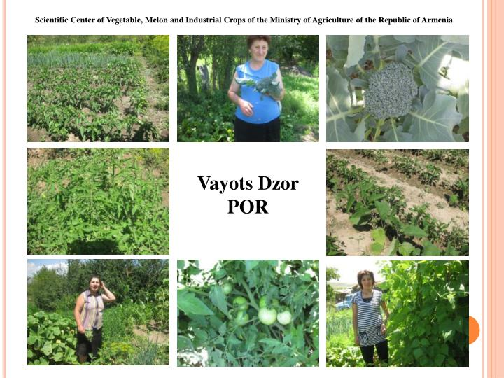Scientific Center of Vegetable, Melon and Industrial Crops of the Ministry of Agriculture of the Republic of Armenia