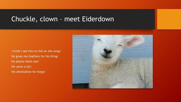 Chuckle, clown – meet Eiderdown