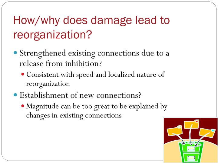 How/why does damage lead to reorganization?