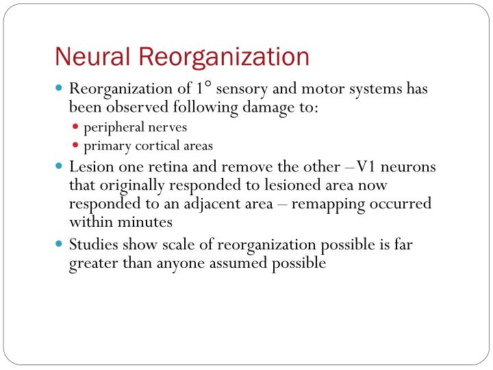 Neural Reorganization
