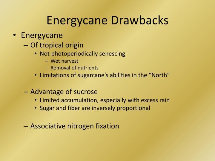 Energycane
