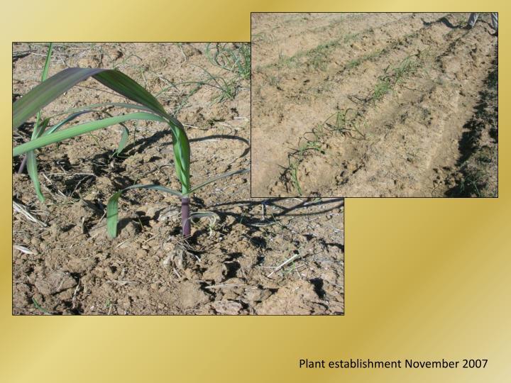 Plant establishment November 2007