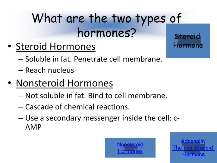 nonsteroid hormones serve as providing communication between