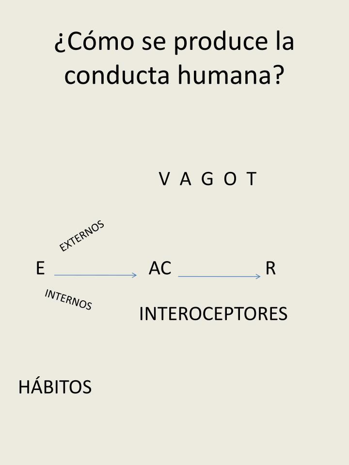 ¿Cómo se produce la conducta humana?