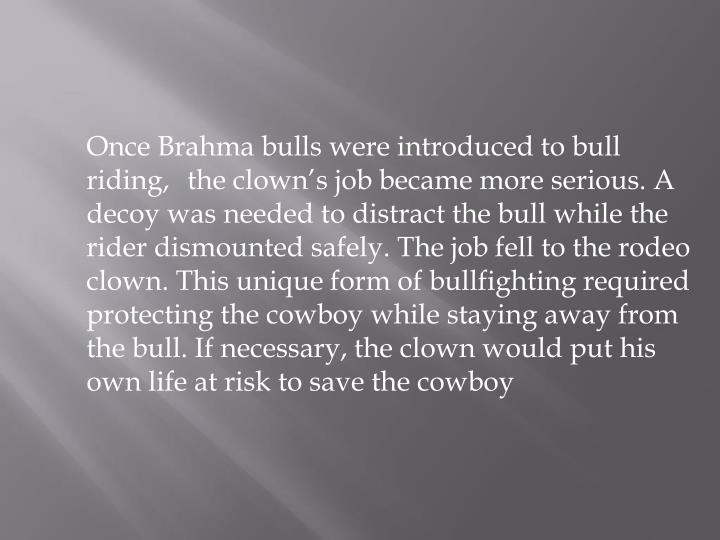 Once Brahma bulls were introduced to bull riding, the clown's job became more serious. A decoy was needed to distract the bull while the rider dismounted safely. The job fell to the rodeo clown. This unique form of bullfighting required protecting the cowboy while staying away from the bull. If necessary, the clown would put his own life at risk to save the cowboy