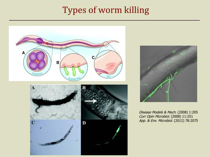 Types of worm killing