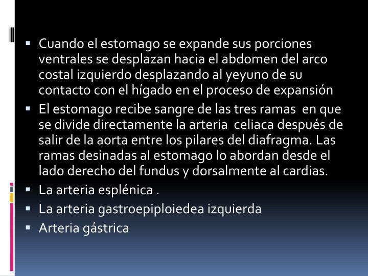 Cuando el estomago se expande sus porciones ventrales se desplazan hacia el abdomen del arco costal izquierdo desplazando al yeyuno de su contacto con el hígado en el proceso de expansión