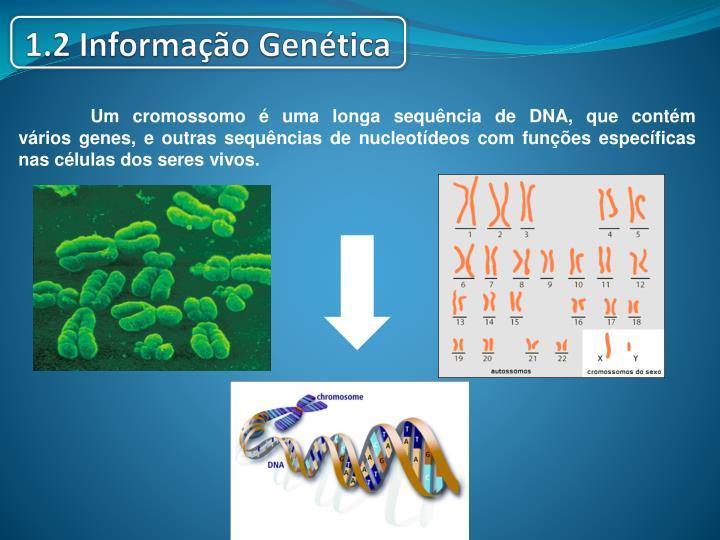 Umcromossomo é uma longa sequência deDNA, que contém váriosgenes, e outras sequências de nucleotídeos com funções específicas nascélulasdosseres vivos.