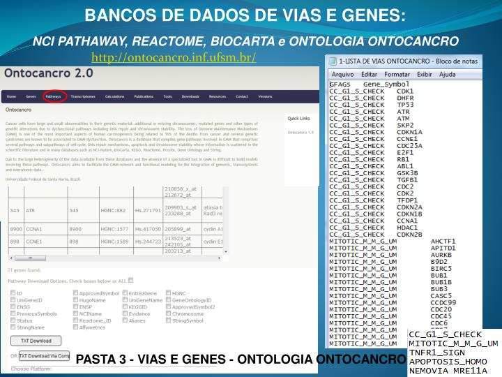 BANCOS DE DADOS DE VIAS E GENES: