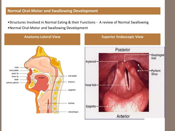 Normal Oral-Motor and Swallowing Development