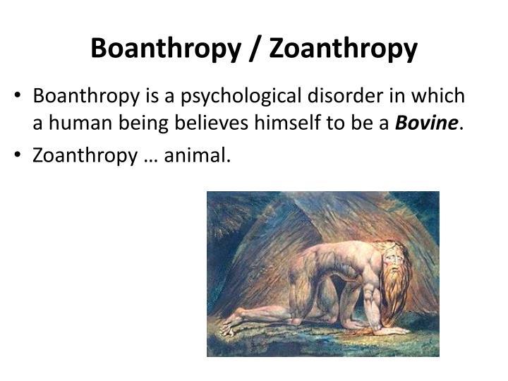 Boanthropy