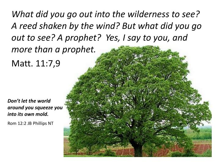 What did you go out into the wilderness to see? A reed shaken by the wind? But what did you go out to see? A prophet?