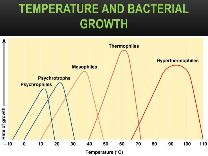bacteria and growth temperature Yet bacteria thrive for warmth because their enzymes function most efficiently between an optimum temperature and their growth rate is increased considerably in this temperature range at very low temperatures the action of bacterial enzymes are inhibited and so they cannot grow further while they still survive.