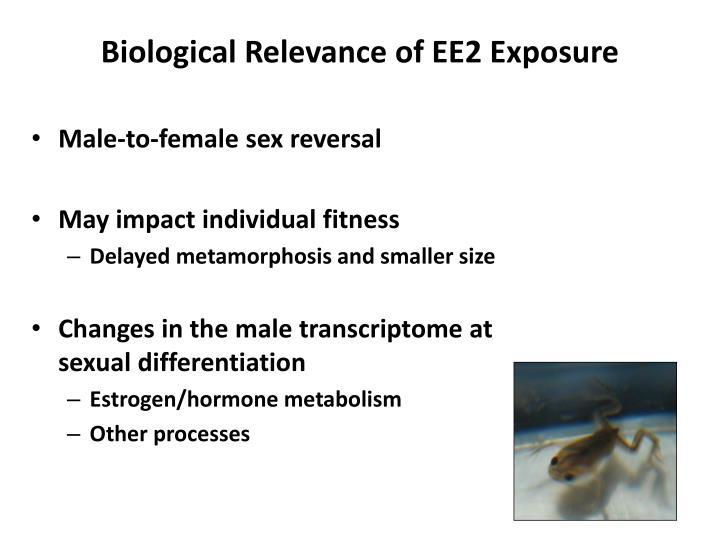 Biological Relevance of EE2 Exposure
