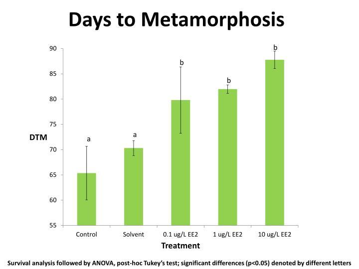 Days to Metamorphosis