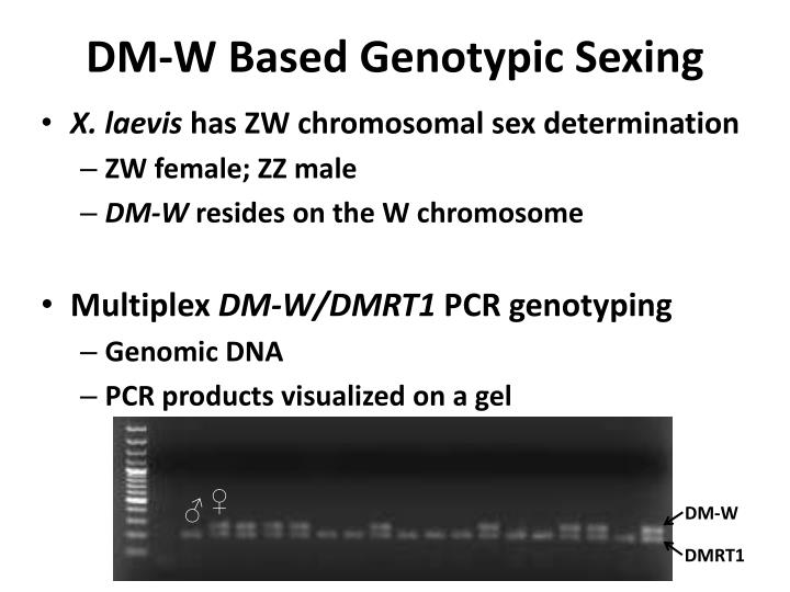 DM-W Based Genotypic Sexing