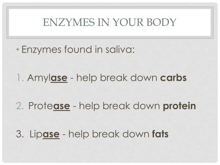 Enzymes in your body