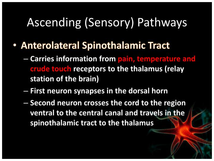 Ascending (Sensory) Pathways