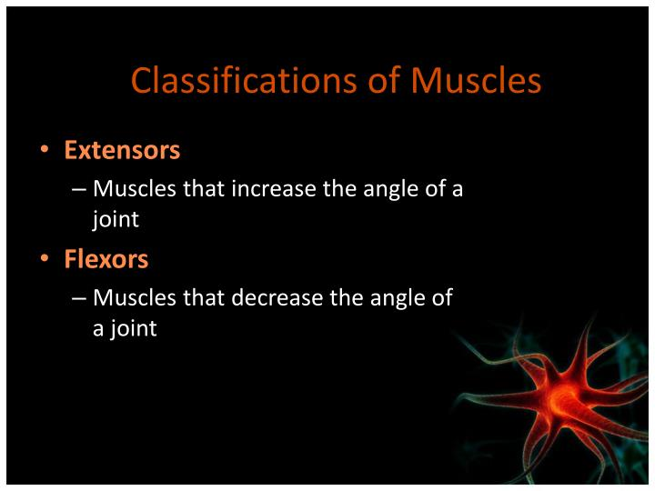 Classifications of Muscles