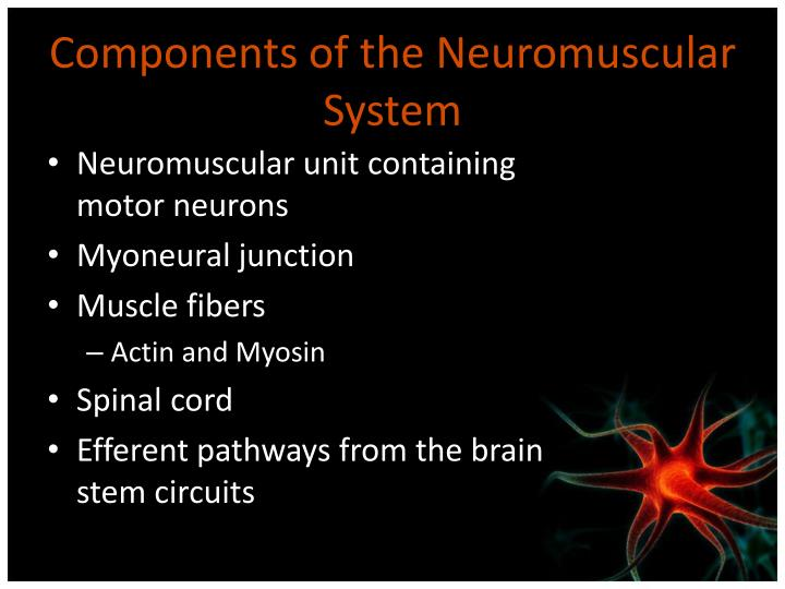 Components of the Neuromuscular System