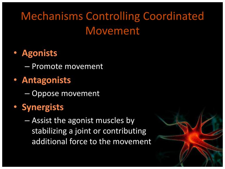 Mechanisms Controlling Coordinated Movement
