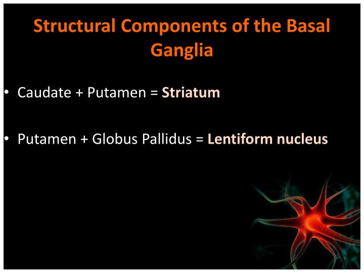 Structural Components of the Basal Ganglia