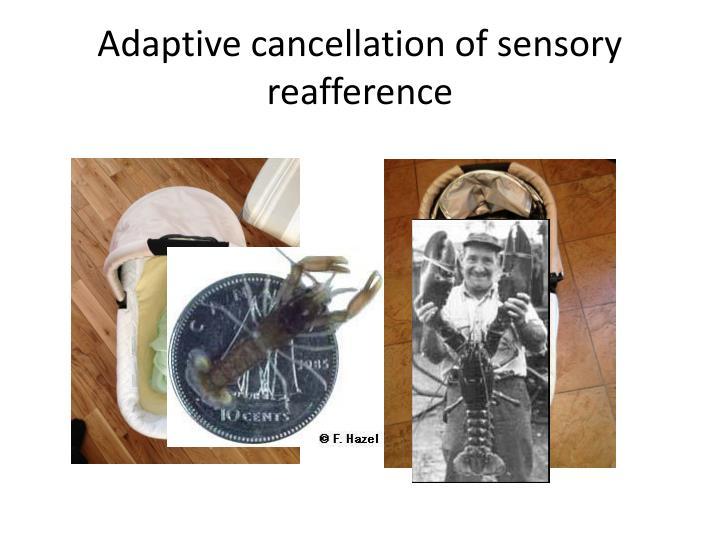 Adaptive cancellation of sensory
