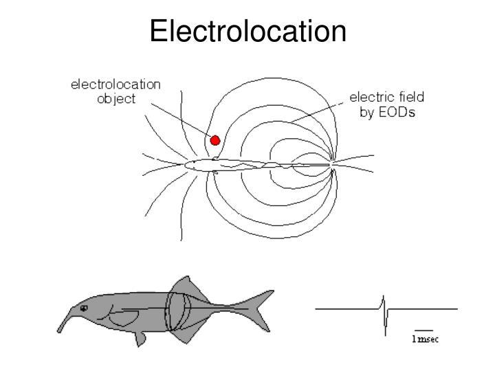 Electrolocation