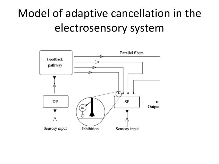 Model of adaptive cancellation in the electrosensory system