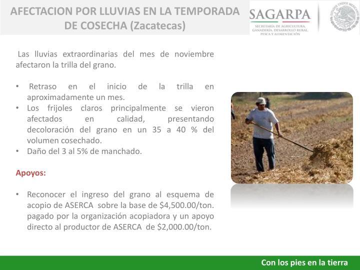 AFECTACION POR LLUVIAS EN LA TEMPORADA DE COSECHA (Zacatecas)