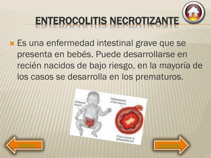 Es una enfermedad intestinal grave que se presenta en bebés. Puede desarrollarse en recién nacidos de bajo riesgo, en la mayoría de los casos se desarrolla en los prematuros.