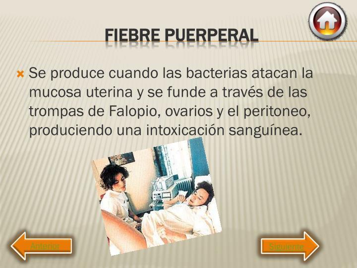 Se produce cuando las bacterias atacan la mucosa uterina y se funde a través de las trompas de Falopio, ovarios y el peritoneo, produciendo una intoxicación sanguínea.