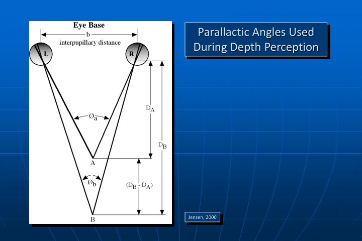Parallactic Angles Used During Depth Perception