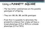using a punnett square2