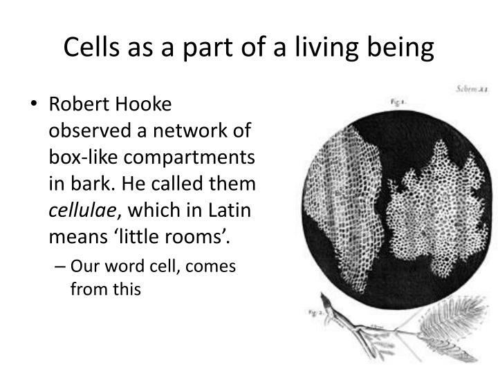 Cells as a part of a living being