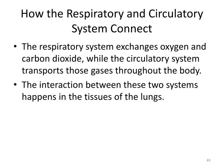 How the Respiratory and Circulatory System Connect