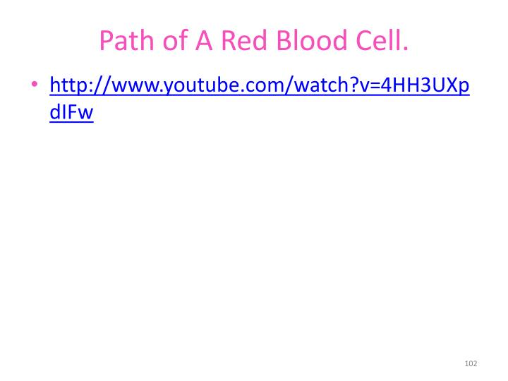 Path of A Red Blood Cell.