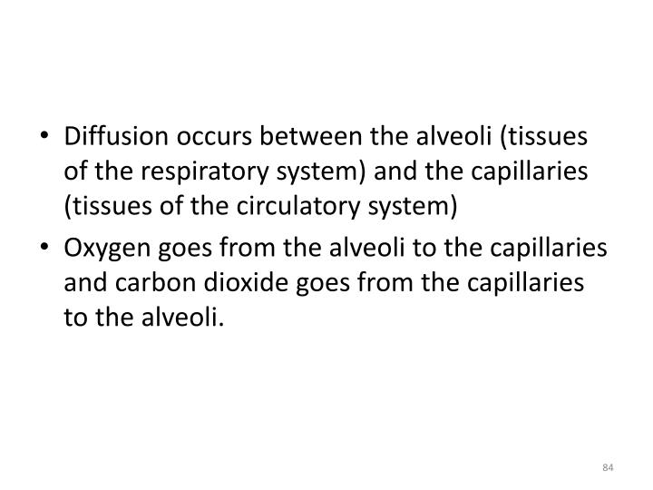 Diffusion occurs between the alveoli (tissues of the respiratory system) and the capillaries (tissues of the circulatory system)