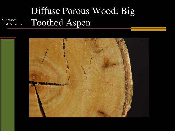 Diffuse Porous Wood: Big Toothed Aspen