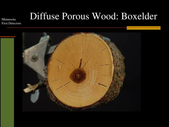 Diffuse Porous Wood: Boxelder