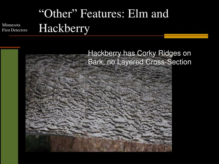"""Other"" Features: Elm and Hackberry"